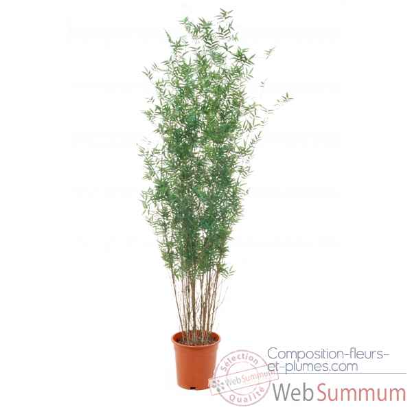 Bamboe oriental 270 cm in pot k Louis Maes -00526.000K