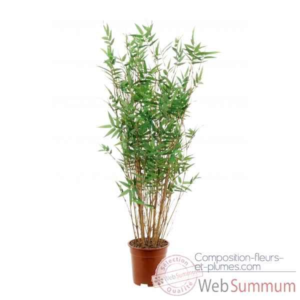 bambou oriental 100 cm en pot louis maes photos composition fleurs et plumes de. Black Bedroom Furniture Sets. Home Design Ideas