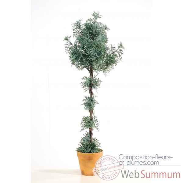 Citroenkruid topiary en pot Louis Maes -03228.000