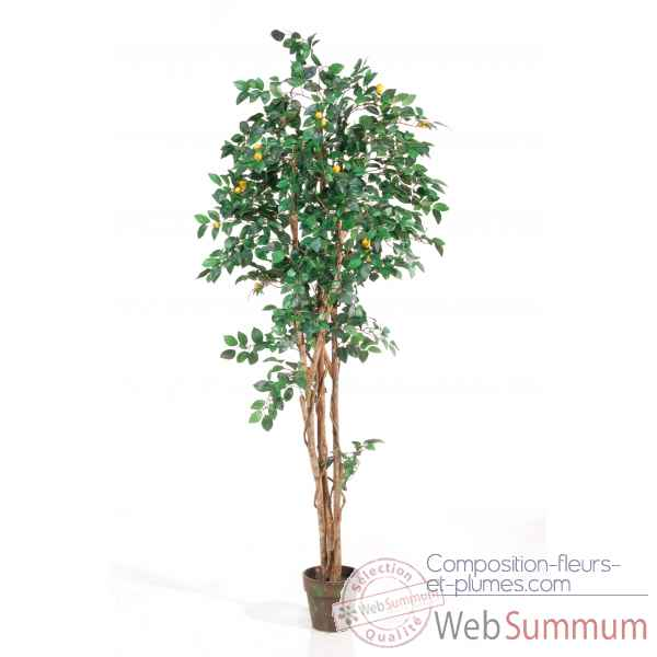 Citronier en pot 180 cm Louis Maes -03525.000