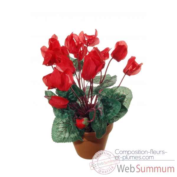 Cyclamen en pot s9 Louis Maes -22037.525S