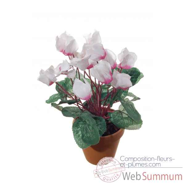 Cyclamen en pot s9 Louis Maes -22037.613S
