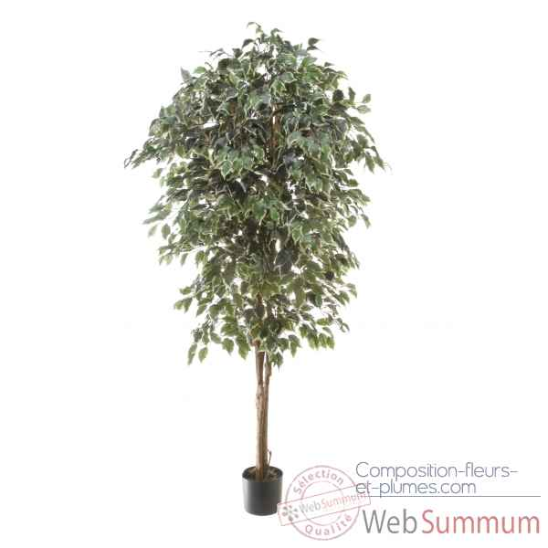 Ficus benjamina bi-color Louis Maes -40107.180