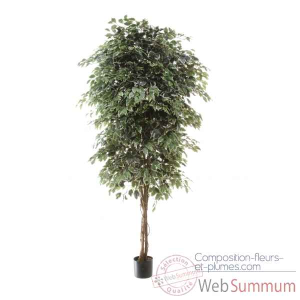 Ficus benjamina bi-color Louis Maes -40107.210