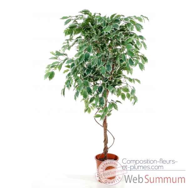 Ficus hawaii 150 cm en pot Louis Maes -03354.000K