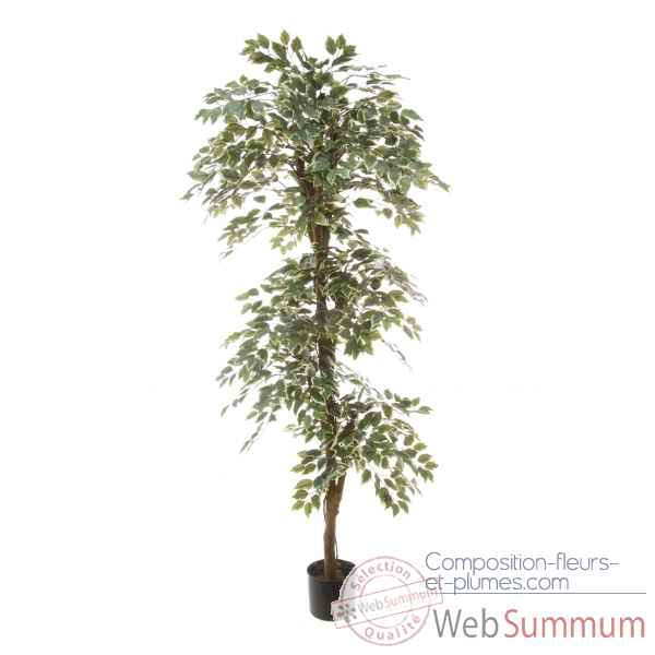 Ficus topiary bi-color Louis Maes -40105.150