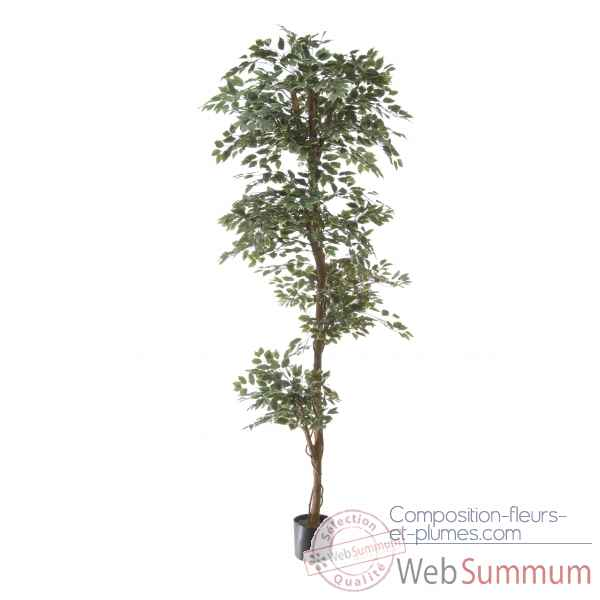 Ficus topiary bi-color Louis Maes -40105.210