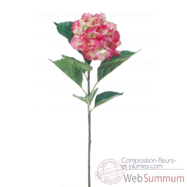 Hortensia grand Louis Maes -04699.434
