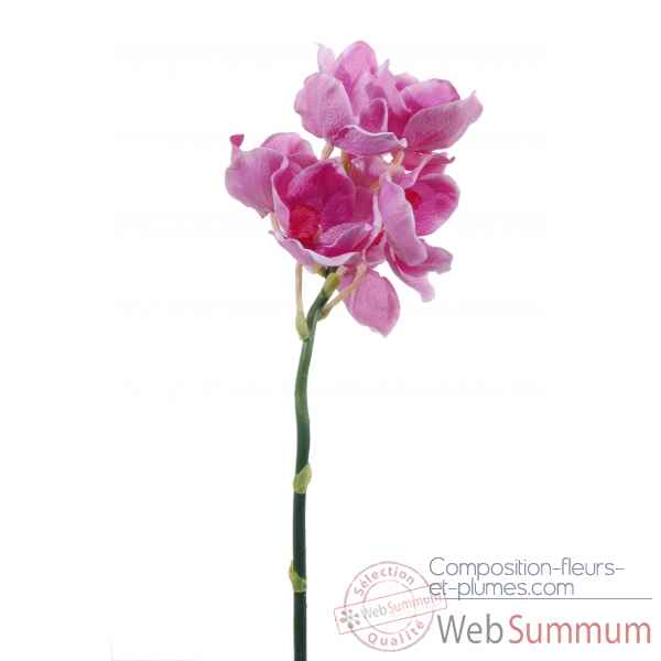 Orchidee x 8 Louis Maes -04866.628