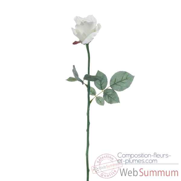 Rose ouverte alice Louis Maes -05580.401