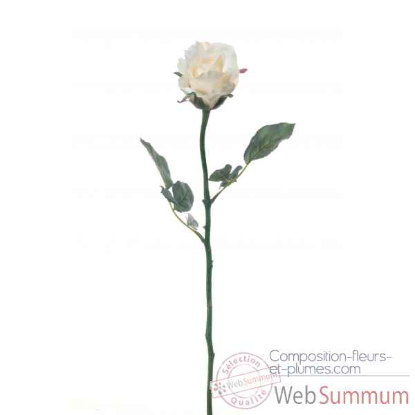 Rose ouverte alice Louis Maes -05580.406