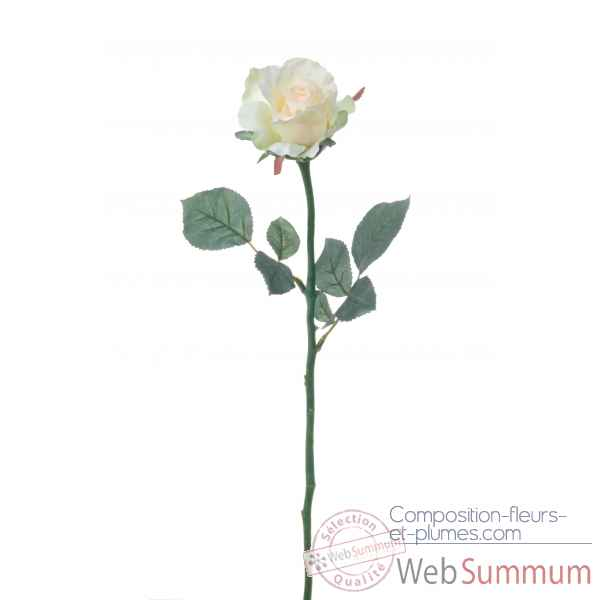 Rose ouverte alice Louis Maes -05580.409