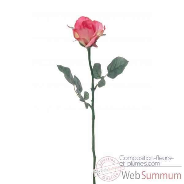 Rose ouverte alice Louis Maes -05580.434