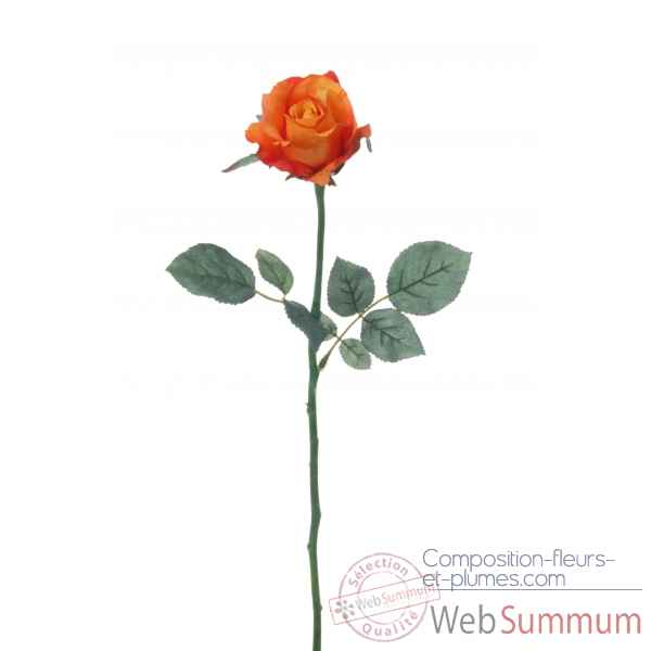 Rose ouverte alice Louis Maes -05580.502