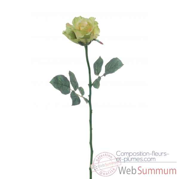 Rose ouverte alice Louis Maes -05580.583