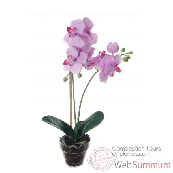 tina orchid e 52cm en pot louis maes dans orchid e dahlia renoncule. Black Bedroom Furniture Sets. Home Design Ideas